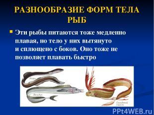РАЗНООБРАЗИЕ ФОРМ ТЕЛА РЫБ Эти рыбы питаются тоже медленно плавая, но тело у них