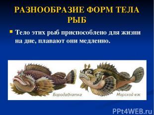 РАЗНООБРАЗИЕ ФОРМ ТЕЛА РЫБ Тело этих рыб приспособлено дляжизни на дне, плавают