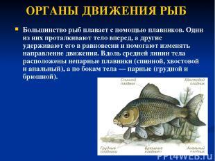 ОРГАНЫ ДВИЖЕНИЯ РЫБ Большинство рыб плавает с помощью плавников. Одни из них про