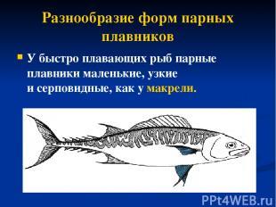 Разнообразие форм парных плавников У быстро плавающих рыб парные плавники малень