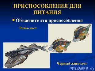 ПРИСПОСОБЛЕНИЯ ДЛЯ ПИТАНИЯ Объясните эти приспособления Рыба-лист Черный живогло