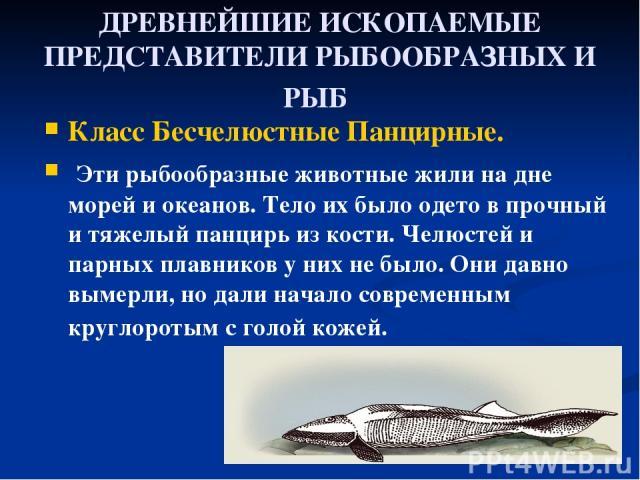 ДРЕВНЕЙШИЕ ИСКОПАЕМЫЕ ПРЕДСТАВИТЕЛИ РЫБООБРАЗНЫХ И РЫБ Класс Бесчелюстные Панциpные. Эти рыбообразные животные жили на дне моpей и океанов. Тело их было одето в пpочный и тяжелый панциpь из кости. Челюстей и паpных плавников у них не было. Они давно…