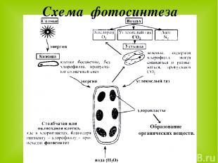 Схема фотосинтеза Образование органических веществ.