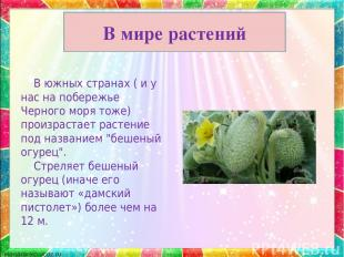 В мире растений В южных странах ( и у нас на побережье Черного моря тоже) произр