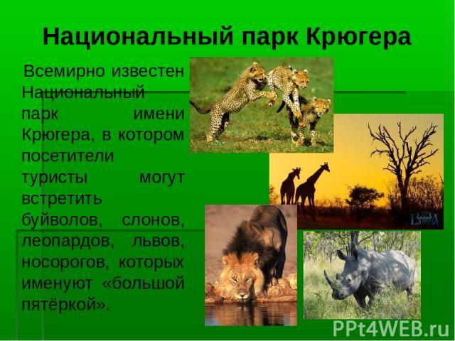 Национальный парк Крюгера Всемирно известен Национальный парк имени Крюгера, в котором посетители туристы могут встретить буйволов, слонов, леопардов, львов, носорогов, которых именуют «большой пятёркой».