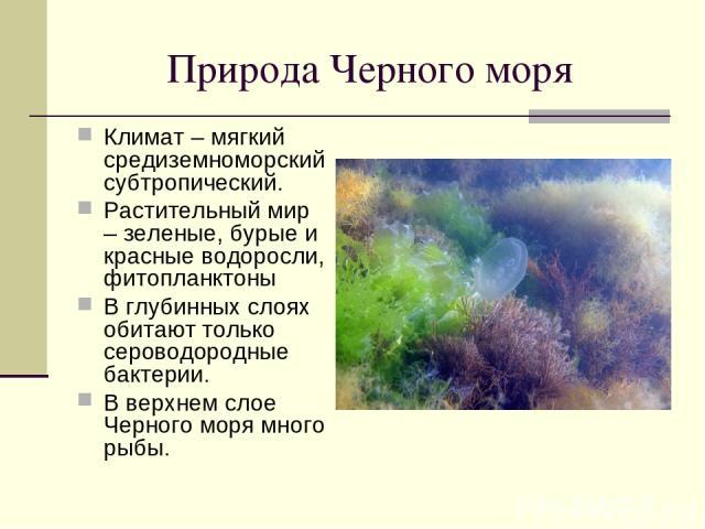 Природа Черного моря Климат – мягкий средиземноморский субтропический. Растительный мир – зеленые, бурые и красные водоросли, фитопланктоны В глубинных слоях обитают только сероводородные бактерии. В верхнем слое Черного моря много рыбы.