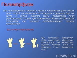 Полиморфизм Под полиморфизмом понимают наличие в жизненном цикле одного вида осо