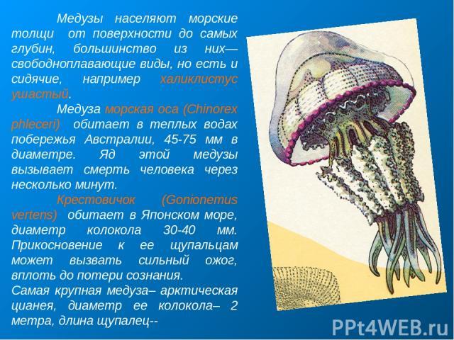 Медузы населяют морские толщи от поверхности до самых глубин, большинство из них—свободноплавающие виды, но есть и сидячие, например халиклистус ушастый. Медуза морская оса (Chinorex phleceri) обитает в теплых водах побережья Австралии, 45-75 мм в д…