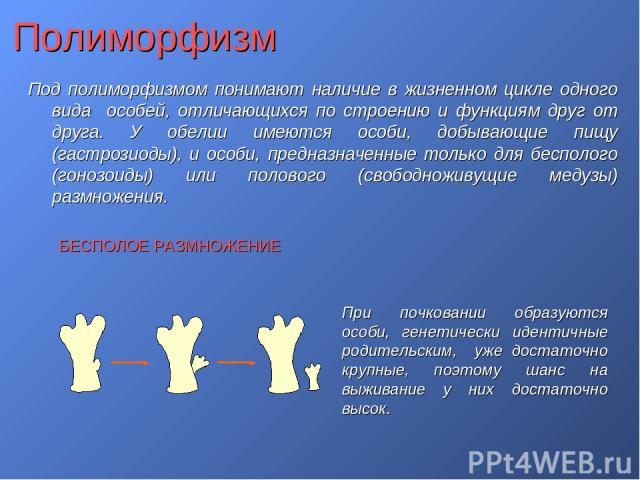 Полиморфизм Под полиморфизмом понимают наличие в жизненном цикле одного вида особей, отличающихся по строению и функциям друг от друга. У обелии имеются особи, добывающие пищу (гастрозиоды), и особи, предназначенные только для бесполого (гонозоиды) …