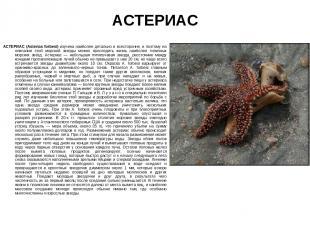 АСТЕРИАС АСТЕРИАС (Asterias forbesi) изучена наиболее детально и всесторонне, и
