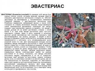 ЭВАСТЕРИАС ЭВАСТЕРИАС (Evasterias troschelii) На примере этой звезды был хорошо