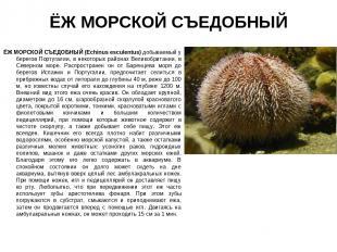 ЁЖ МОРСКОЙ СЪЕДОБНЫЙ ЁЖ МОРСКОЙ СЪЕДОБНЫЙ (Echinus esсulentus) добываемый у бере