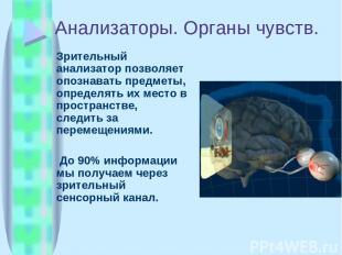 Анализаторы. Органы чувств. Зрительный анализатор позволяет опознавать предметы,