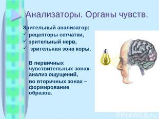 Анализаторы. Органы чувств. Зрительный анализатор: рецепторы сетчатки, зрительны
