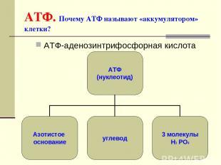 * АТФ. Почему АТФ называют «аккумулятором» клетки? АТФ-аденозинтрифосфорная кисл