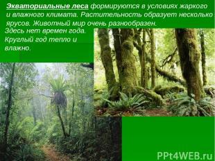 Экваториальные леса формируются в условиях жаркого и влажного климата. Раститель