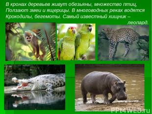 В кронах деревьев живут обезьяны, множество птиц, Ползают змеи и ящерицы. В мног