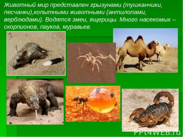 Животный мир представлен грызунами (тушканчики, песчанки),копытными животными (антилопами, верблюдами). Водятся змеи, ящерицы. Много насекомых – скорпионов, пауков, муравьев.