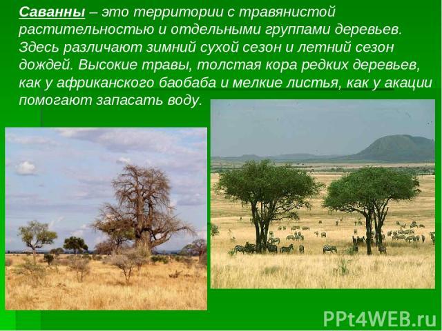 Саванны – это территории с травянистой растительностью и отдельными группами деревьев. Здесь различают зимний сухой сезон и летний сезон дождей. Высокие травы, толстая кора редких деревьев, как у африканского баобаба и мелкие листья, как у акации по…