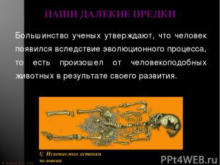 © Жадаев Д.Н., 2005 НАШИ ДАЛЕКИЕ ПРЕДКИ Большинство ученых утверждают, что челов