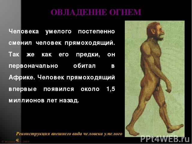 © Жадаев Д.Н., 2005 ОВЛАДЕНИЕ ОГНЕМ Человека умелого постепенно сменил человек прямоходящий. Так же как его предки, он первоначально обитал в Африке. Человек прямоходящий впервые появился около 1,5 миллионов лет назад.