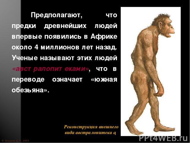© Жадаев Д.Н., 2005 Предполагают, что предки древнейших людей впервые появились в Африке около 4 миллионов лет назад. Ученые называют этих людей «австралопитеками», что в переводе означает «южная обезьяна».