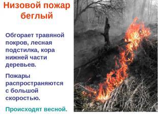 Низовой пожар беглый Обгорает травяной покров, лесная подстилка, кора нижней час