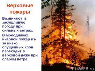 Верховые пожары Возникают в засушливую погоду при сильных ветрах. В молодняках н