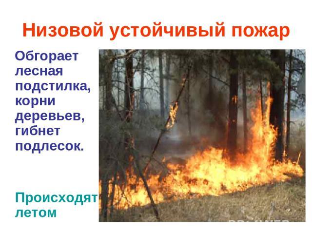 Низовой устойчивый пожар Обгорает лесная подстилка, корни деревьев, гибнет подлесок. Происходятлетом