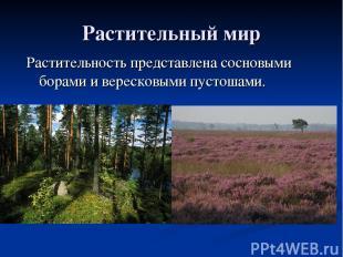 Растительный мир Растительность представлена сосновыми борами и вересковыми пуст