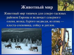 Животный мир Животный мир типичен для северо-таежных районов Европы и включает с