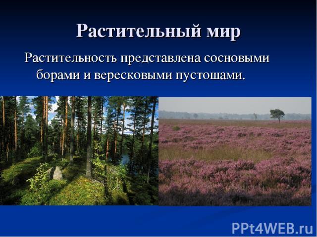 Растительный мир Растительность представлена сосновыми борами и вересковыми пустошами.
