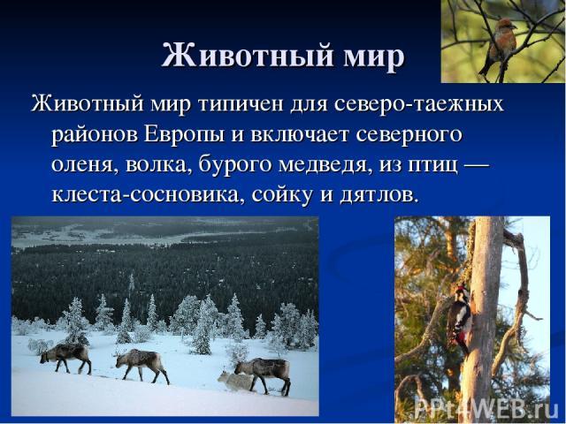 Животный мир Животный мир типичен для северо-таежных районов Европы и включает северного оленя, волка, бурого медведя, из птиц — клеста-сосновика, сойку и дятлов.