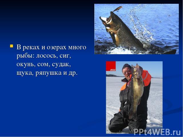 В реках и озерах много рыбы: лосось, сиг, окунь, сом, судак, щука, ряпушка и др.