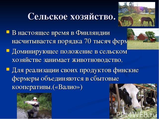 Сельское хозяйство. В настоящее время в Финляндии насчитывается порядка 70 тысяч ферм. Доминирующее положение в сельском хозяйстве занимает животноводство. Для реализации своих продуктов финские фермеры объединяются в сбытовые кооперативы.(«Валио»)