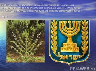 Герб Государства Израиль - семисвечник (менора) - напоминает растение, известное