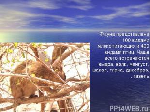 Фауна представлена 100 видами млекопитающих и 400 видами птиц. Чаще всего встреч