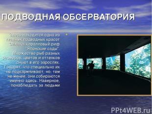 ПОДВОДНАЯ ОБСЕРВАТОРИЯ Здесь находится одна из главных подводных красот Эйлата,