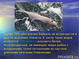 Более 70% обитателей Байкала не встречаются в других водоёмах планеты. К числу т