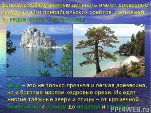 Большую хозяйственную ценность имеют древесные ресурсы тайги прибайкальских хреб