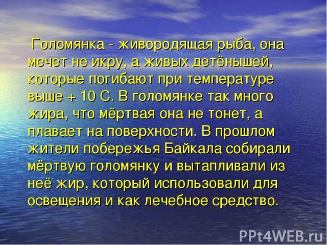 Голомянка - живородящая рыба, она мечет не икру, а живых детёнышей, которые погибают при температуре выше + 10 С. В голомянке так много жира, что мёртвая она не тонет, а плавает на поверхности. В прошлом жители побережья Байкала собирали мёртвую гол…