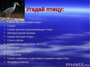 Угадай птицу: Самая крупная птица в мире – Страус Самая крупная водоплавающая пт
