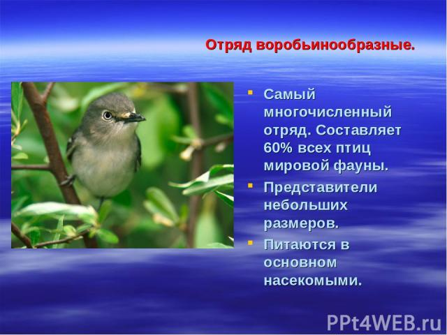 Отряд воробьинообразные. Самый многочисленный отряд. Составляет 60% всех птиц мировой фауны. Представители небольших размеров. Питаются в основном насекомыми.