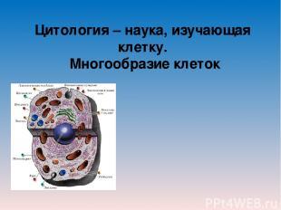 Цитология – наука, изучающая клетку. Многообразие клеток