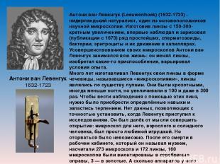 Антони ван Левенгук 1632-1723 Антони ван Левенгук (Leeuwenhoek) (1632-1723) - ни