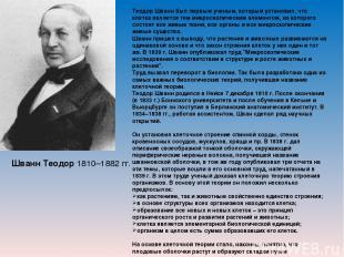 Шванн Теодор 1810–1882 гг. Теодор Шванн был первым ученым, который установил, чт