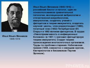 Илья Ильич Мечников 1845-1916 Илья Ильич Мечников (1845-1916) — российский биоло