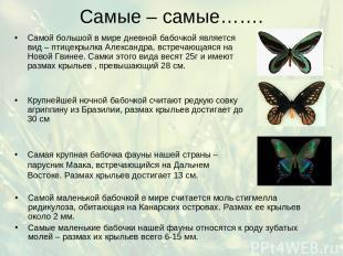 Самые – самые……. Самой маленькой бабочкой в мире считается моль стигмелла ридику
