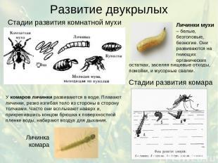 Развитие двукрылых Стадии развития комнатной мухи Стадии развития комара У комар