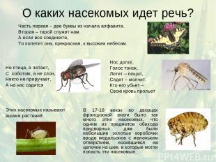 О каких насекомых идет речь? Часть первая – две буквы из начала алфавита. Вторая